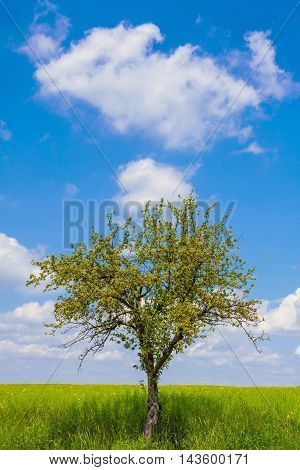 Green field,tree and cloudy sky, natural background