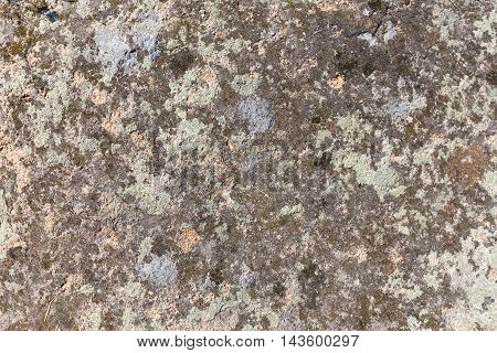 Various colors of lichen on stone background