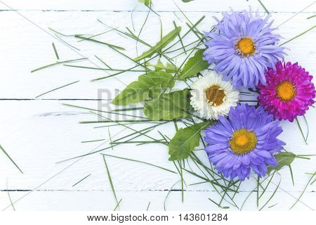 Four multi-colored chrysanthemums and green grass on a white table