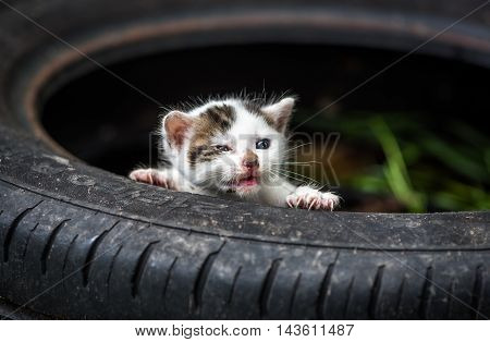 Newly Born Cute Little White Baby Cat With Open Mouth Without Teeths