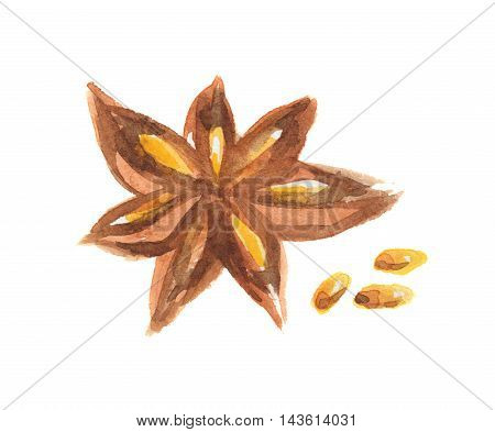 Watercolor star anise. Isolated spice on white background. Seasoning for meal or dessert.