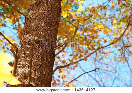 Autumn scene with chipmunk somewhere in New England