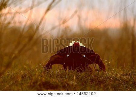 Male Black Grouse (Tetrao tetrix) at evening lek. National park Plesheevo Lake Yaroslavl region Russia