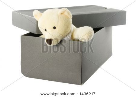 Teddy Bear In A Shoebox