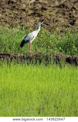 Image of a stork on nature background