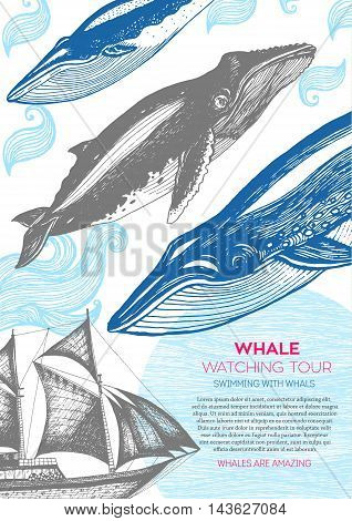 Nautical vector illustration drawn in ink. Frigate and whale on the waves. Sea design template. Whales watching holiday.