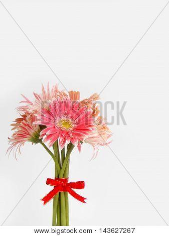 Beautiful pink gerbera flower on white background