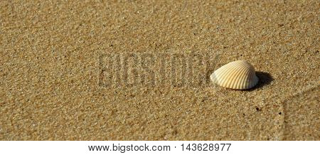 Sea shell with sand as background. Beach theme.