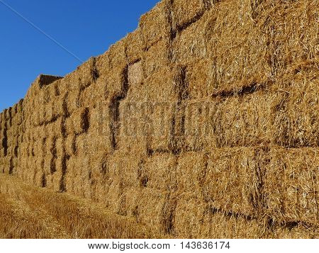 Wall Made Of Stacked Hay Bales On A Field. Summer Farm Scenery. Agriculture Concept.
