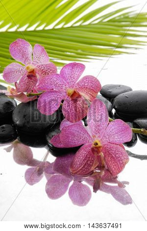 Lying down pink orchid and black stones with green leaf