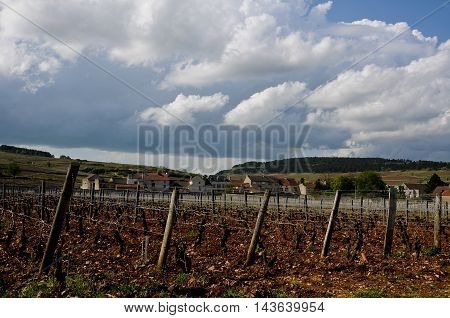 the beautiful vineyards in beaune cote de beaune where wine is produced france