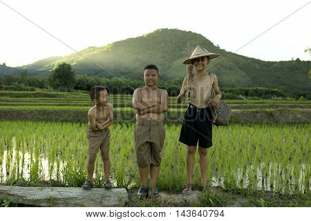 Three boys standing in the cornfield mountain