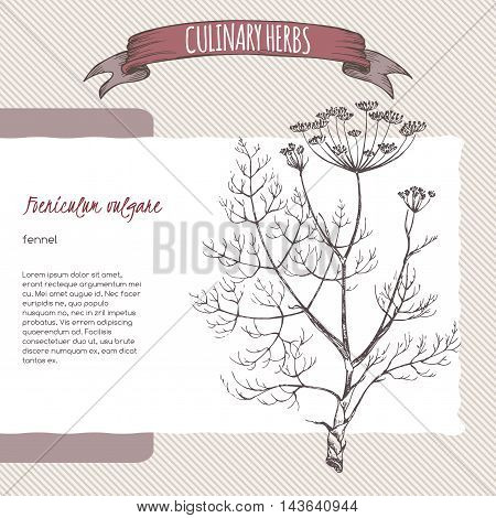 Foeniculum vulgare aka fennel vector hand drawn sketch. Culinary herbs collection. Great for cooking, medical, gardening design.