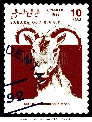 STAVROPOL RUSSIA - August 21 2016: A stamp printed in Sahrawi Arab Democratic Republic (SADR) shows Scimitar Arruit (ammotragus lervia) circa 1992