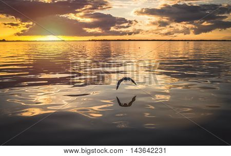 Seagull flying low over the river at sunset background