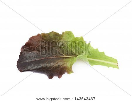 Fresh salad leaf isolated over the white background