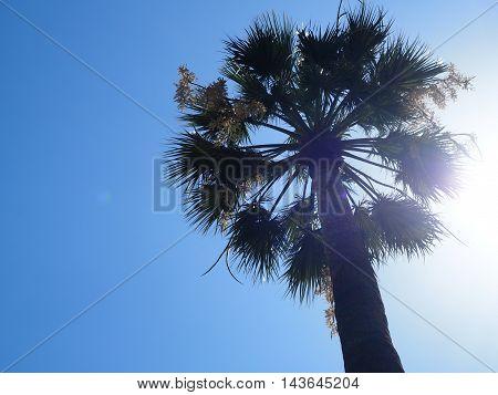 Palm Tree against sun and blue sky