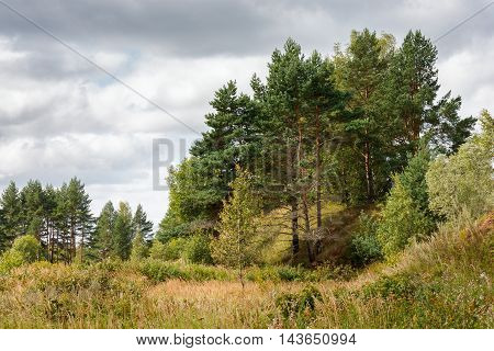 Pine grove and grass and bushes under the dramatic cloudy sky with gray clouds - natural rural landscape of pine forest in cloudy weather