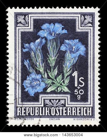 ZAGREB, CROATIA - JULY 03: stamp printed by Austria, shows Trumpet Gentian (Gentiana kochiana), circa 1948, on July 03, 2014, Zagreb, Croatia