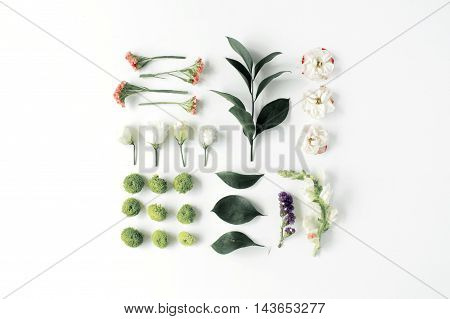roses pink flower buds branches and leaves isolated on white background. flat lay top view