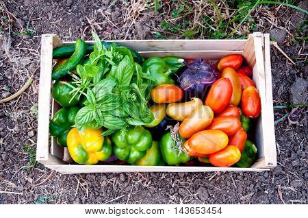 variegated wooden box with tomatoes and fresh cut vegetables Just Picked