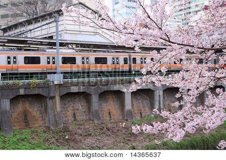 Primavera em Tóquio