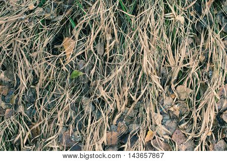 Dried Grass And Leaf Background