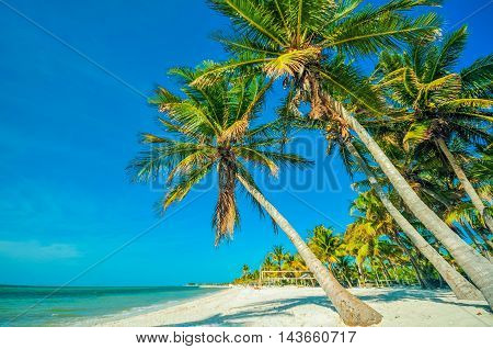 Tropical Beach with Palms. Beautiful Beach Palms and the Ocean Scenery. Tropical Destination Theme.