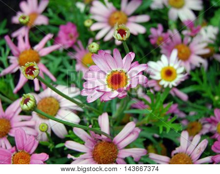 a picture of flowers that amazes every time. with impressive detail flower