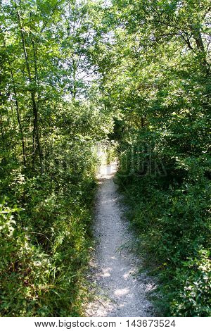 path in the woods on a sunny summer day.