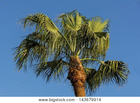 palm in the sunlight on the wind on blue sky background