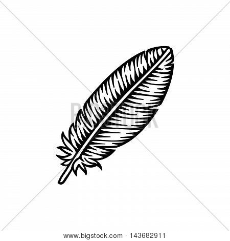 Vector illustration of Feather on white background.