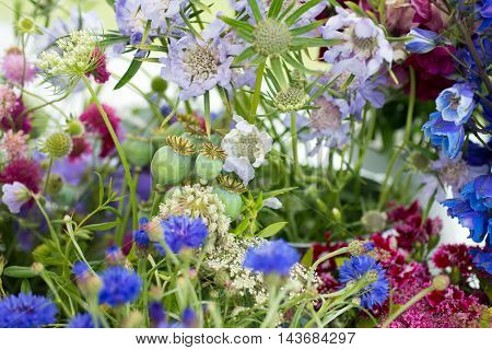 A Selection Of Colourful Flowers