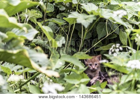 small young red cat first experiences in the countryside