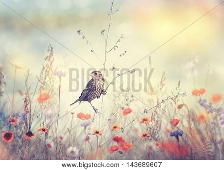 Field with wild flowers and a bird at sunset