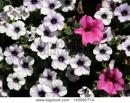Background of beautiful flowers in the park