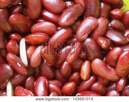 Kidney Beans Legumes Vegetables