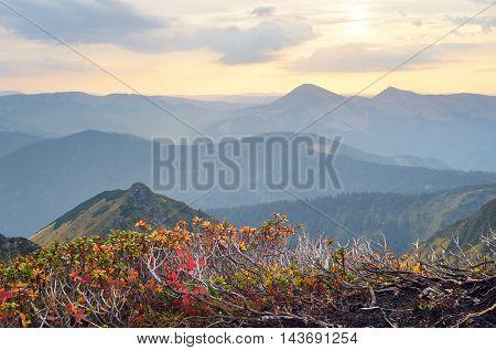 Sunrise in the mountains. Autumn landscape with rhododendron bushes. Carpathians, Ukraine, Europe