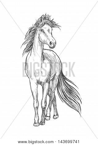 Standing horse pencil sketch. Walking full length mustang stallion vector etching