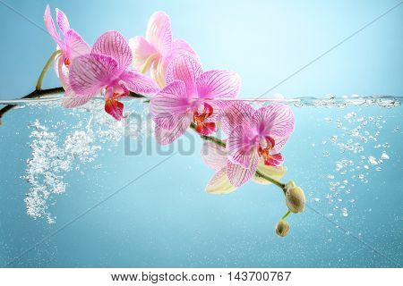 orchid flower in water