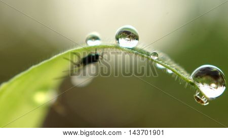 Drops of water on a blade of grass.