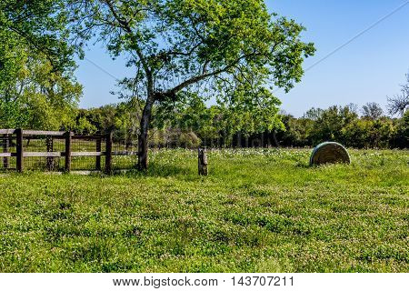 A Meadow With Round Hay Bales And Fresh Texas Wildflowers