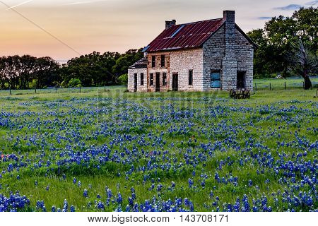 Late Evening Sunset Shot of an Interesting Abandoned Old Rock Homestead in a Beautiful Texas Field Loaded with the Famous Texas Bluebonnet (Lupinus texensis) Wildflowers.