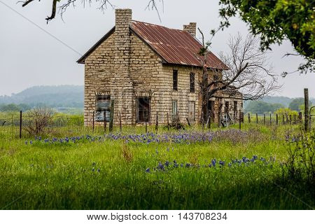 An Interesting Abandoned Old Texas Rock Homestead in a Beautiful Field Loaded with the Famous Texas Bluebonnet (Lupinus texensis) Wildflowers.