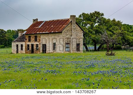 Abandonded Old House In Texas Wildflowers.