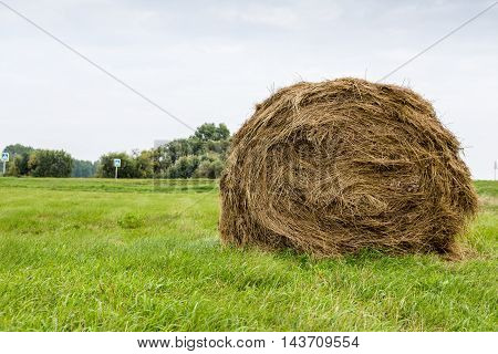 Round bale of straw on green grass