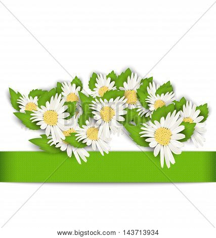 Illustration Beautiful Flowers Camomile with Shadows on White Background - Vector