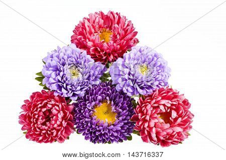 Bouquet of colorful aster flowers on white background close up