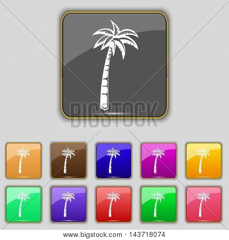 Palm Icon Sign. Set With Eleven Colored Buttons For Your Site. Vector