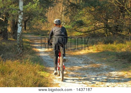 Forrest Path With Bicyclist